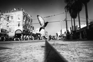 Venice Bird Landing