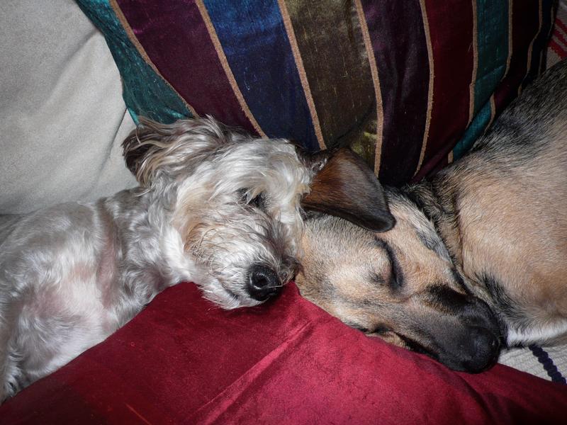 Arta and Ludwig